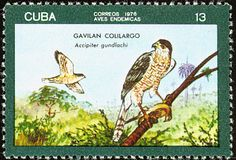 Gundlach's Hawk stamps - mainly images - gallery format