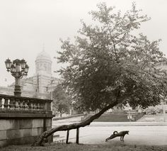 Love this picture by Pentti Sammallahti :)
