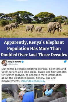 #Kenya's #Elephant #Population #Doubled #Three #Decades Super Cute Puppies, Super Cute Animals, Some Funny Jokes, Lame Jokes, Wtf Funny, Cute Fluffy Dogs, Fluffy Cows, Life Goals Future, Future Mom