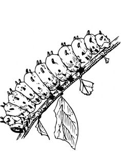 The Spiny Caterpillar Coloring Page