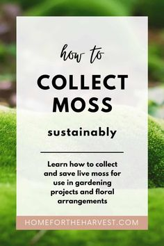 Moss is a beautiful element in garden design, living art, and indoor gardens. Moss is also a key ingredient in arrangements such as kokedama, terrariums, fairy gardens, and natural centerpieces. Once you know where to find moss, you'll certainly want to use it in your own decor! Diy Garden Projects, Garden Crafts, Free Garden Planner, Types Of Moss, Buy Moss, Moss Plant, Moss Garden, Bbq Tools, You Know Where