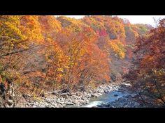 秋の葛根田渓谷(かっこんだけいこく)