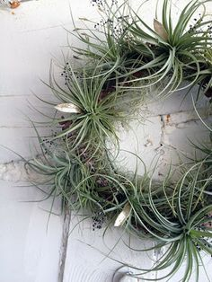 Tillandsia wreath nicely done