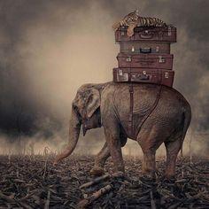 Карас Йонут – румынский фотограф, создающий шедевры в области цифрового искусства и фотографии. Его работы прекрасны, они завораживают и з...