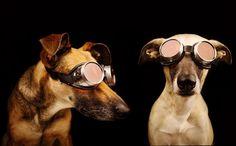 Эмоциональные собаки в работах Эльке Фогельзанг (25 фото)