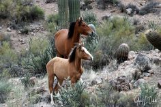 Salt River Wild Horses Advocates by Gary Odell