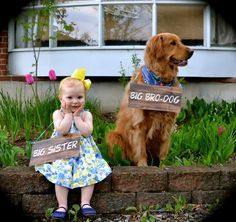 Second child pregnancy announcement with dog