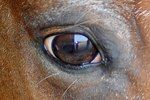 Equine Coat Color Genetics 101     By Erica Larson, News Editor• Apr 05, 2013