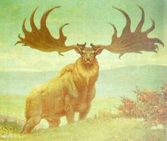 The Irish Elk was the largest deer that ever lived.    Its home was Eurasia, from Ireland into the lakes at Baikal, and it lived during the Pleistocen area.    The last of the giant deer died out about 7 thousand years ago. Artwork by Charles R. Knight