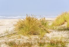 Beach Grass At Driftwood Beach by Marv Vandehey  ||  Beach Grass At Driftwood Beach Photograph by Marv Vandehey https://fineartamerica.com/featured/beach-grass-at-driftwood-beach-marv-vandehey.html?utm_campaign=crowdfire&utm_content=crowdfire&utm_medium=social&utm_source=pinterest