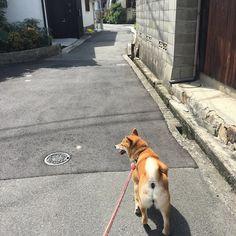 暑中お見舞い申し上げます犬  #暑い #アスファルト #猟奇的 #犬って大変