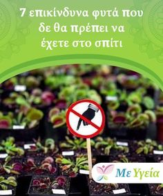 Dangerous plants that you shouldn't have at home Salvia Divinorum, Logo Design, Cooking Recipes, Health, Lifestyle, Nature, Plant, Die Cutting, Naturaleza