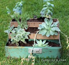Plant a tackle box and more succulent garden ideas #succulents #gardenideas #spon #gardening
