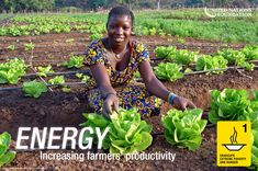 Reconociendo la importancia de la energía para el desarrollo sostenible, la Asamblea General de las Naciones Unidas proclamó el año 2012 Año Internacional de la Energía Sostenible para Todos mediante resolución 65/151.
