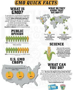 "Points to be made about GMOs not in this infographic:  -GMO means crops withstand higher concentrations of Neonicotinoid pesticides leaving residue ingested by humans and bees.   -Use of neonicotinoids are killing colonies of bees. -GMO producers, like Monsanto use patents on crops to sue farmers whose crops have been cross contaminated by GMO crops ""naturally"". They can take a farmer's property outright. -Monsanto hides behind a guise of ""sustainability"" but really monopolizes our food…"
