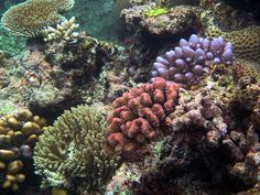 Great Barrier Reef 024, via Flickr. A beautiful array of colours and varieties of coral in the Great Barrier Reef...by Steve Evans  Qld Australia