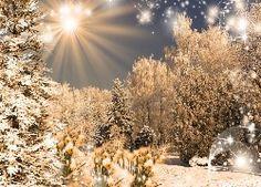 Lasy, Drzewa, Promienie, Słońca, Zima