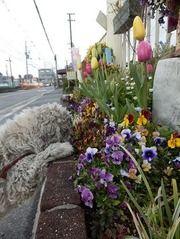 花壇の花を眺めるれでぃこ