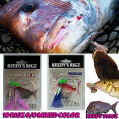 6 Mustad Striped Bass Fishing Bait Rigs 60lb Line 7//0 Hook Saltwater Rigged