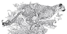 Animorphia Coloring Pages Book coloring Animal Coloring Pages, Coloring Book Pages, Coloring Sheets, Printable Adult Coloring Pages, Animals Images, Colorful Pictures, Doodle Art, Zentangles, Drawings