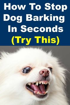 Best Dog Training, Brain Training, Stop Dog Barking, Dog Behavior, Dog Care, Dog Grooming, Best Dogs, Dogs And Puppies, Pomeranians