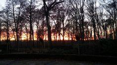 Sunset in my garden - 2016