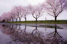 Rain of Spring by Kouji Tomihisa (50 Mind-Blowing Examples of Landscape Photography via Bored Panda)