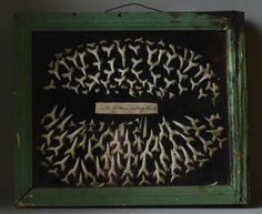 "1920s ""Teeth of Man Eating Shark"" Mounted and Framed"