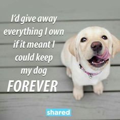 IN A HEARTBEAT!! Miss you so much Gracie Mae...