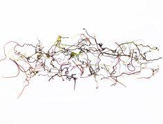 grape vine tendrils (mary Jo hoffman)