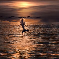 Znalezione obrazy dla zapytania dolphins in the sunset Animal Pictures, Cool Pictures, Cool Photos, Amazing Photos, Free Photos, Beautiful Moon, Beautiful Places, Water Life, Ocean Creatures