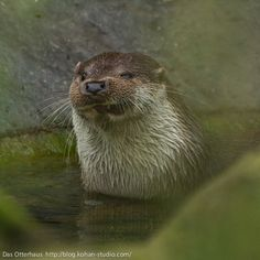 Otter does his pirate impression - September 20, 2012