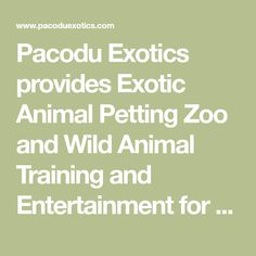 Pacodu Exotics provides Exotic Animal Petting Zoo and Wild Animal Training and Entertainment for Parties and Events in the Greater Houston, TX Area.