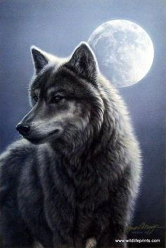 A beautiful yet ferocious wolf stands alert with the full moon shining bright at his back.