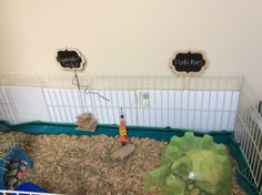 Adorable little chalkboard cage sign with the pig's names on it