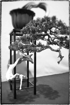 Feel-Spirit-l'Esprit de Phil.[Bonsaï]: Noelanders 2013    See more of my pictures on :   http://feel-spirit-bonsai.blogspot.ch/2013/01/noelanders-2013.html#
