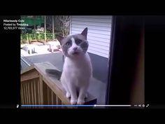 TRUMPY GRUMPY CAT MAD AT THE WORLD BAD LANGUAGE (WARNING EXPLICIT)