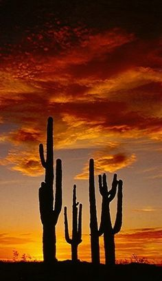 ❖ Sunset North Mountain...Arizona this right here is one of the biggest reason I fell completely in love with AZ