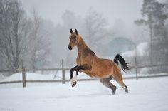 fotart (Artur Baboev) - photos of horses