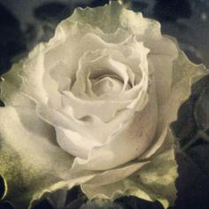 Rose #MakyFlowers