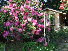 House Studio, Outdoor Structures, Tea, Plants, Plant, Teas, Planets