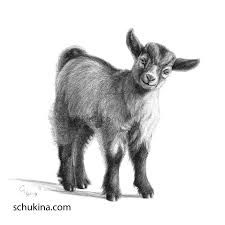 Image result for goat pencil drawing