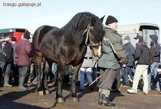 Targ koni - handel końmi - zdjęcie 1 z 1 | zdjęcia galopuje.pl