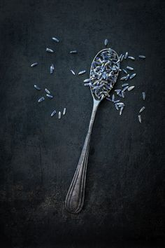 Lavender by Corinna Gissemann