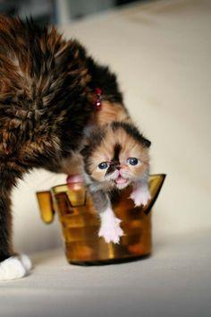 "kitty ""Memebon"""