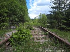 Tinovul Mare Railroad Tracks, Country Roads, Park, Plant