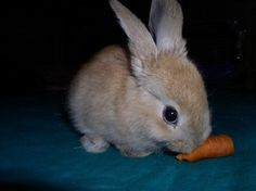 Cute Bunny with Her Carrot