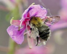 Bee at work Pink Garden, Colorful Garden, Henri Matisse, Dawn Porter, I Love Bees, Bee Friendly, Flower Company, Bugs And Insects, Bee Happy