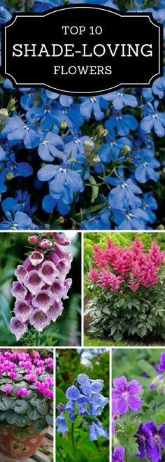 Got a shady yard but want the colorful pops of flowers? Heres a guide to best flowers for shade!