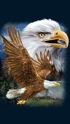 Eagle Images, Eagle Pictures, Beautiful Birds, Animals Beautiful, Cute Animals, Vogel Gif, Aigle Animal, Eagle Wallpaper, Eagle Drawing